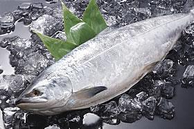 時鮭(定置網)甘塩造り